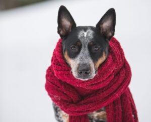 En del hundar blir sjuka av torrfoder - ge dem färskfoder så ökar chanserna till en frisk hund.