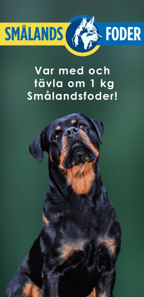 Var med i vår tävling om 1kg hundgodis