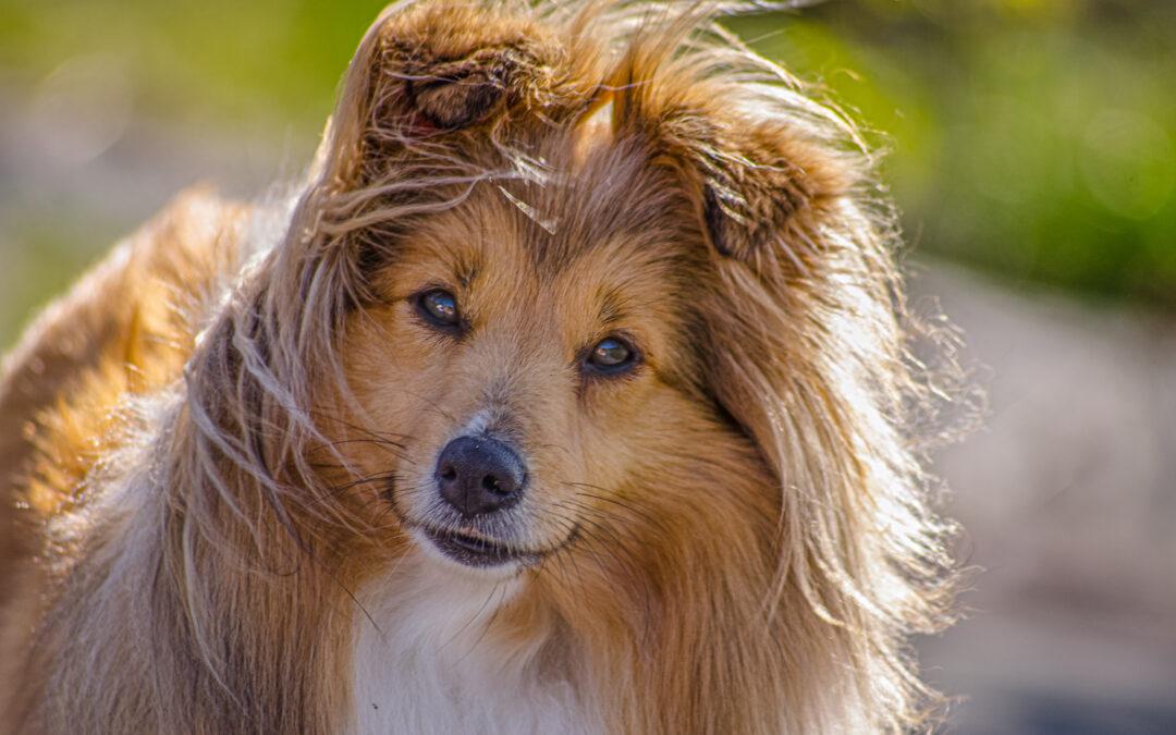 Mimmi – hunden med två liv