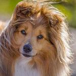Läs mer om artikeln Mimmi – hunden med två liv